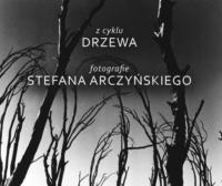 Drzewa. Fotografie Stefana Arczyńskiego